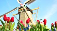 Chystáme se znovu vyjet do Holandska a hledáme 20 zájemců o bezva akci:) Zaujali jsme tě? Čti dál! Studentský výměnný pobyt Maarssen – Šumperk 2020 Spolupráce mezi Gymnáziem Šumperk a […]